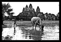 Angkor et encore une civilisation à disparaître...