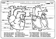 Divisines con divisores variados 03 Hidden Pictures, Human Body, Homeschool, Comics, Skeletal System, Places, Mental Calculation, Math Lessons, Geography