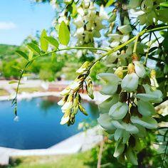 #Spring. #Cojocna #Cluj #Transilvania #Transylvania