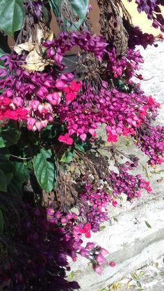 Flor de verão - Bairro Nova Borda. Enfeite da calçada.