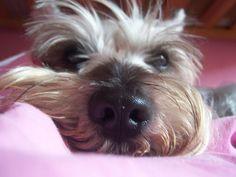 Dukes nose, love it!!!!
