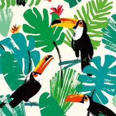 tropical toucans by @charlottetrounce