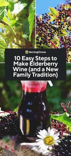 Elderberry wine making is a tradition that has been handed down and we share here the steps required to make delicious wine from your own elderberry bushes! The post 10 Easy Steps to Make Homemade Elderberry Wine appeared first on Aktuelle. Elderberry Bush, Elderberry Recipes, Homemade Wine Recipes, Homemade Liquor, Homemade Wine Making, Wine Names, Pinot Noir Wine, Wine Magazine, Red Wine Glasses