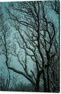 Snowy Branches Canvas Print featuring the photograph Snowy Branches by & copyright Richard Brookes.