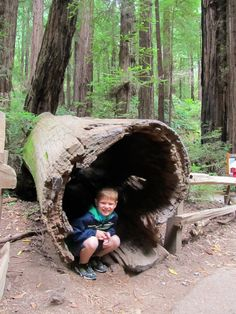 Josh in a Tree Muir Woods National Monument