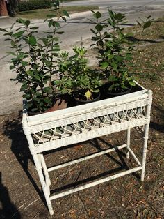 Vintage Wicker Plant Stand and Galvanized Tin Planter-Old White Chippy Rectangle Planter Basket-Cottage Chic Porch Sunroom-Victorian Style by AlloftheAbove on Etsy