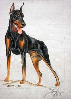 DOBERMAN DOG HAND PAINTED BY LEIGH DESIGNS NEEDLEPOINT CANVAS::HP CATS AND DOGS::Hand Painted Needlepoint Canvases::Jackie's NeedleArt Mania - Discount Needlepoint Products and More: Crewel Embroidery, Counted Cross Stitch, Stamped Embroidery