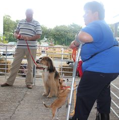 Tess Thomas and Tilly Dent Daisy Mae, Dog Show, Dogs, Animals, Animales, Animaux, Doggies, Animal, Pet Dogs