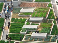 Cities must help produce more food