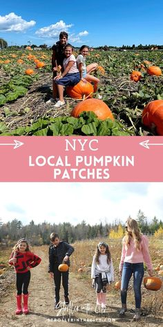 #pumpkin #pumpkinpatch #pumpkinpicking #nyc
