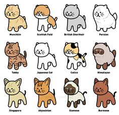 The various types of Cat on Behance