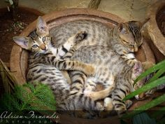 Kittens noon napping