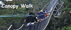 http://www.wildgorillasafaris.com/rwanda-gorilla-safaris/1-day-rwanda-gorilla-tour.html