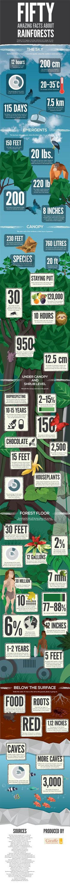 Infographic: Amazing Facts About Rainforests' (According to the National Geographic, rainforests could vanish from the planet completely within the next century if current deforestation rates continue. National Geographic, Earth Science, Life Science, Science Facts, Rainforest Facts, E Mc2, Applied Science, Thinking Day, We Are The World