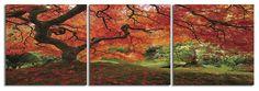 Japanese MaplePhotography Triptych Print 3 Panel Landscape Photography Taken by Photographer Tom Schwabel Frameless 3 Panel Photography Print of Japanese...