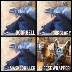 Dog Fact #305