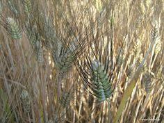 Πως προστατεύουμε τους σπόρους http://ift.tt/2vDK92a