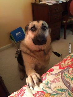 This is what she does if you stop petting her - 9GAG