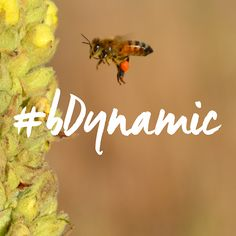 What would #bDynamic be without bees? #bees #biodynamic