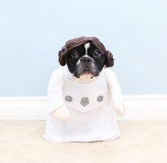 Help me Obi-Wan Kenobi! @hello_boba #toystyle #petfriendly #animallovers #doglovers #dog #frenchie #happyhalloween #costume #princessleia #princessleiabuns #sweet