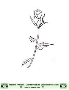 Step finished long stem roses How to Draw Long Stem Roses ...