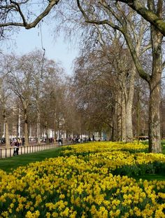 St James Park, London (by Jim Lock on Flickr)