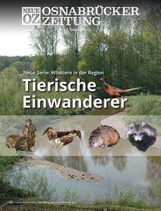 Eingewanderte Wildtiere in der Region: Lesen Sie jetzt mehr zum Titelthema in Ihrer Abendausgabe. www.noz.de/abo