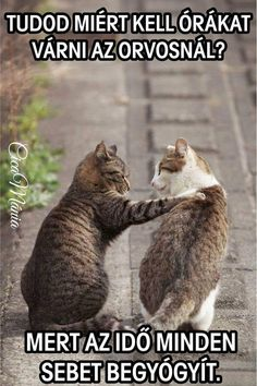 Funny Animal Memes Of The Day – 32 Pics – Lovely Animals World Lustige Tiermemes des Tages – 32 Bilder – Schöne Tierwelt Katzen Funny Animal Quotes, Animal Jokes, Cute Funny Animals, Cute Kittens, Cats And Kittens, Cats Bus, Baby Kittens, Siamese Cats, Funny Cat Memes