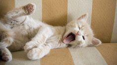Τα θετικα του να βλεπετε βιντεο με Γατες στο Youtube
