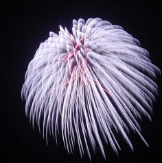 Magnificent Lilac Firework by EpicFireworks