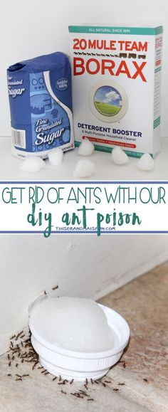 Poison Ants DIY - I wish I had learned about this years ago! It's cheap, easy, fast and it WORKS!