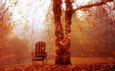 """""""Una sencilla hoja no se vuelve amarilla sin el consentimiento de todo el árbol"""""""