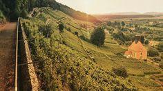 #sunset #sunshine #landschaftsfotografie #landschaft #simplysaxony #sogehtsaechsisch #ig_bestshots #landscape #landscape_photography #morning #wine #kirche #church #heydresden #visitdresden #visitgermany #ig_photooftheday #ig_landscape #ig_germany #ig_deutschland