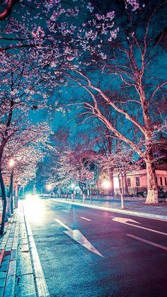 Japanese Street Cherry Blossom Night Scenery iPhone 6 wallpaper