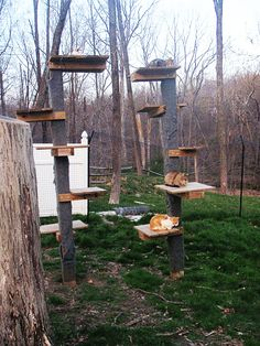 outdoor cat tree pinteres. Black Bedroom Furniture Sets. Home Design Ideas
