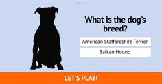 Are you a true dog lover? Can you recognize all these 21 dog breeds?!  #quiz #DogPerson