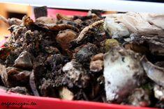10 mitów domowego kompostowania