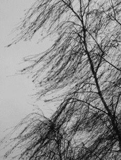 Teraz zawirowania w pogodzie. Potem byle jaka zima. http://tvnmeteo.tvn24.pl/informacje-pogoda/prognoza,45/teraz-zawirowania-w-pogodzie-potem-byle-jaka-zima,188336,1,0.html