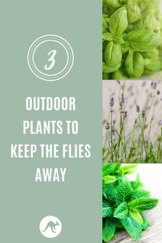 Plants to keep flies away from your yard or patio. How to keep pests away so you can enjoy your outdoor space! Outdoor Plants, Garden Plants, Outdoor Spaces, Outdoor Decor, Keep Flies Away, Fly Repellant, Basil Plant, Types Of Plants, Shade Plants