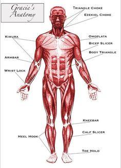 BJJ Anatomy