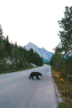 photo scenery A new friend at Banff National Park Into The Wild, Adventure Awaits, Adventure Travel, Banff National Park, National Parks, Parcs Canada, Nationalparks Usa, Jolie Photo, To Infinity And Beyond