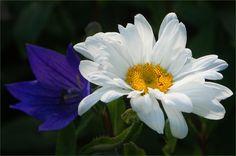 Blume im Juli - Jahreszeiten - Galerie - Community
