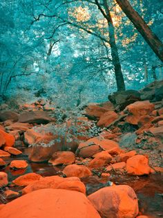 pale turquoise and orange fantasy woodland scene - magical Orange Walls, Orange And Turquoise, Green And Orange, Orange Sorbet, Photo Wall Collage, Picture Wall, Verde Aqua, Photowall Ideas, Architecture Restaurant