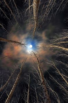 """""""The moon is friend for the lonesome to talk to."""" ~ Carl Sandburg 'Forest & Moon' By Babis Mavrommatis Beautiful Moon, Beautiful World, Beautiful Images, Shoot The Moon, Image Nature, Moon Pictures, Harvest Moon, Amazing Nature, Night Skies"""