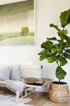 white living room with grey couch