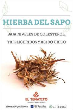 Plantas medicinales - Hierba del Sapo