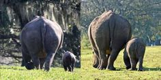 Here you can see how much  Baby Jasiri has grown in the last three months. The picture on the left is from the week she was born and the picture on the right is from last week, when she turned 3 months old.