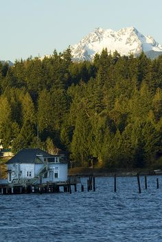 Seabeck, Washington with the Olympic Mountains peaking over the trees....never heard of rhis place until I went to my cousins wedding. ....very nice