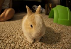 bunny bunny bunny (: