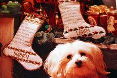 Custom Dog Dog Lover Gift Personalized Dog by SpoiledFelinesArt.